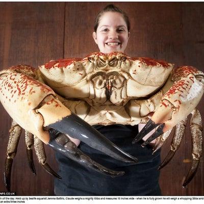 蟹の爪は……の記事に添付されている画像