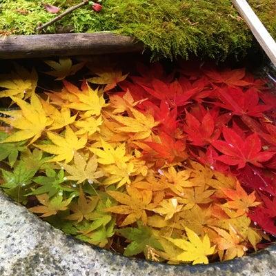 楊谷寺の花手水鉢の記事に添付されている画像