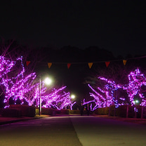 水戸千波湖 「桜並木イルミネーション」の記事に添付されている画像