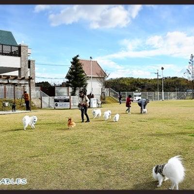 今年さいごの GREEN GABLES☆彡の記事に添付されている画像