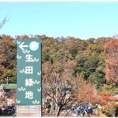 生田緑地 ~神秘的だった奥の池~の記事に添付されている画像