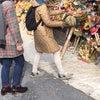 氷川神社十日市の画像