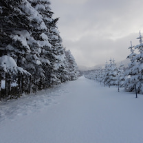 尻別岳(1107m)藪スキー始めの記事に添付されている画像