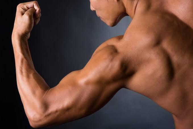 筋肉 腕 の 骨、関節、筋肉の働き