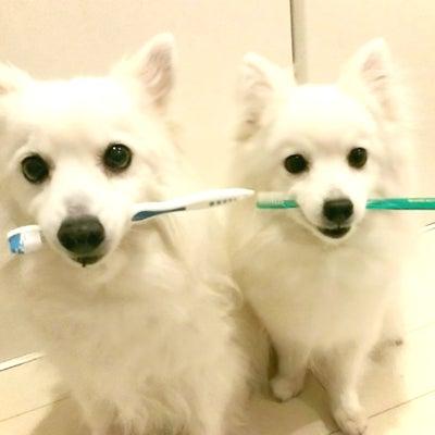 犬だって、歯が命✨の記事に添付されている画像