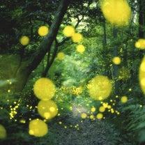 相生山の自然を守りたい 相生山緑地道路問題 愛知県名古屋市天白区の記事に添付されている画像