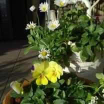 春待ち 植物達(*˙︶˙*)♡*°の記事に添付されている画像