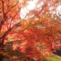 大人になって、両親との初めての京都旅行の記事に添付されている画像