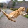 1月のイベントは猫好きさんのための婚活パーティー♡の画像