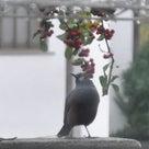 12日の朝に鳥が来たよ~♪の記事より