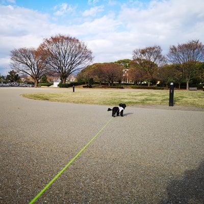 寒い!寒い!お散歩!の記事に添付されている画像
