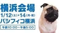 Pet博2019横浜会場 ロゴ