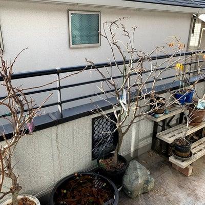 「冬の藤」と「おはぎ」の記事に添付されている画像