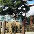 上野動物園いきました