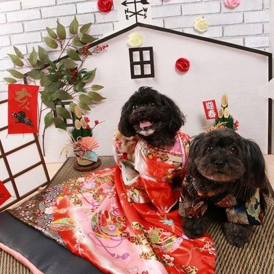 12月7日8日Cafe Remy クリスマス・お正月撮影会の記事に添付されている画像