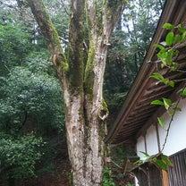 丹生川上神社 下社  宮司の皆見さんのお話の記事に添付されている画像