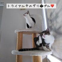 ありがたき幸せ〜、明日は譲渡会の記事に添付されている画像