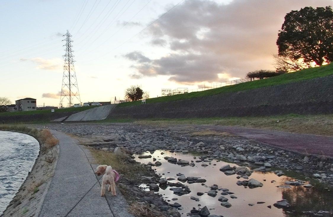 12日の夕方散歩です。の記事より