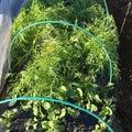 #収穫の画像