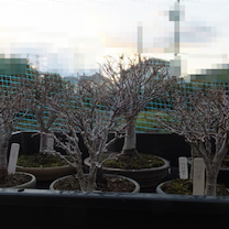 我が家で「武蔵野」を~の記事に添付されている画像