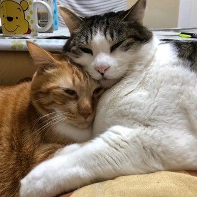 今日は電話創業の日と隠れ家の猫たちの記事に添付されている画像