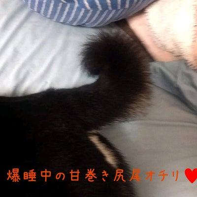 柴犬のオチリに居るヤツの正体は…の記事に添付されている画像