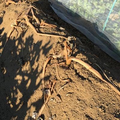 第1農園 12月15日 農作業の記録②の記事に添付されている画像