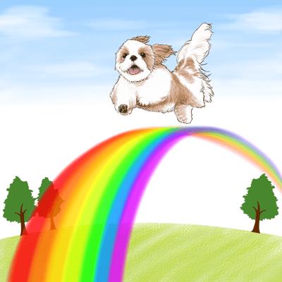 愛犬の終末期におけるレイキ活用〜レイキ体験談〜の記事に添付されている画像