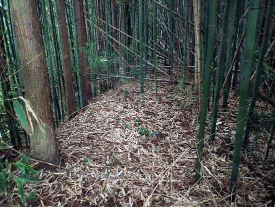 【6】稲村御所
