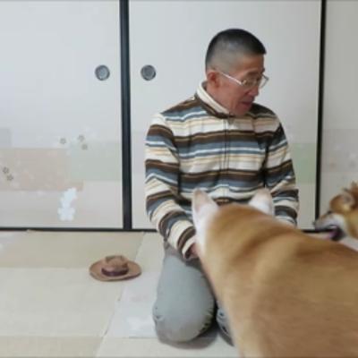 超過激⁉先輩犬もタジタジ!散髪したての飼い主の頭大好き柴犬まめの記事に添付されている画像