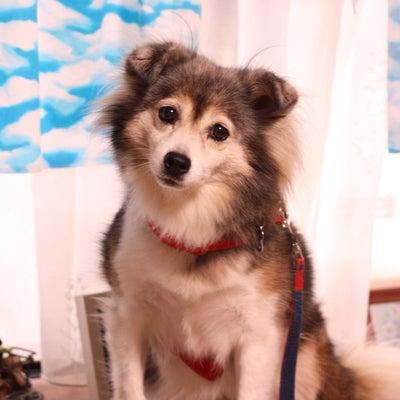 初めまして♡MIX犬チャコちゃんの記事に添付されている画像