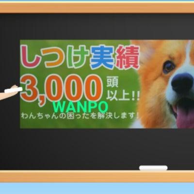 飼い主さんと愛犬が学んでいけるのはこちらだけ!!の記事に添付されている画像