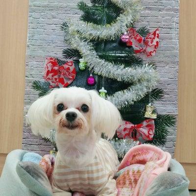 ワンワン♪ワンティー\(^o^)/ドッグカフェ広島の記事に添付されている画像