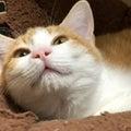 #保護猫の画像
