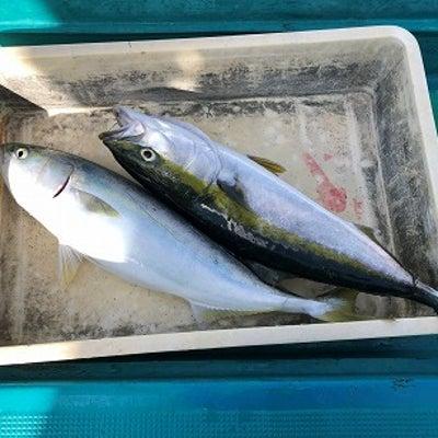12月17日谷口釣船最新釣果の記事に添付されている画像