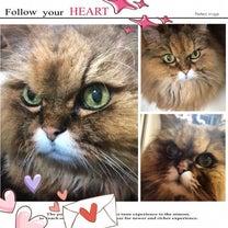 心と心の交換便♡の記事に添付されている画像