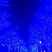 代々木公園の青の洞窟へ✨