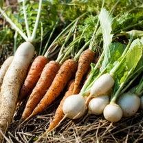 大掃除と食のエネルギーと冬至と妖怪TIMEの記事に添付されている画像