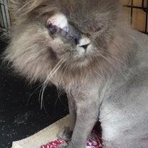眼球摘出手術しました…の記事に添付されている画像
