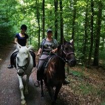 ドイツの森で朝の乗馬の記事に添付されている画像