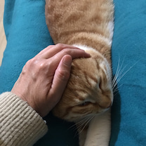 ☆ 役に立った猫ベッド ☆の記事に添付されている画像