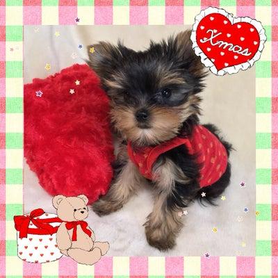 子犬情報ミニちゃんの記事に添付されている画像