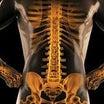 『運動が骨を強くする仕組み』