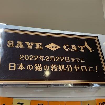SAVE THE CAT 2022年2月22日までに日本の猫の殺処分ゼロに!の記事に添付されている画像
