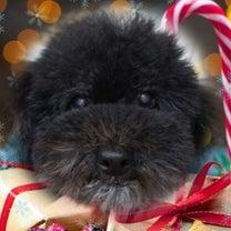 クリスマス仕様⁉️✨の記事に添付されている画像