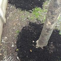雪囲いの合間に行う庭木の肥料やりの記事に添付されている画像