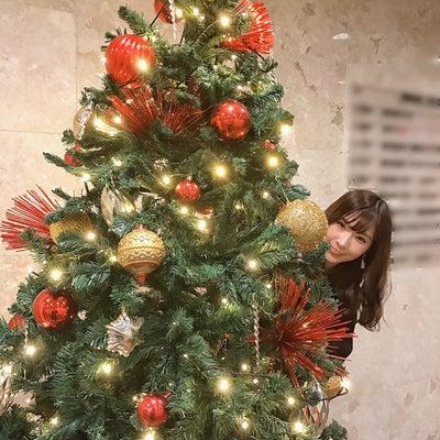 クリスマスツリー【スタッフより】の記事に添付されている画像