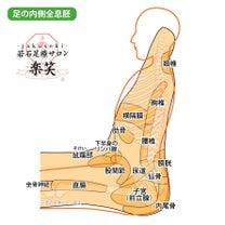 足の内側全息胚の記事に添付されている画像