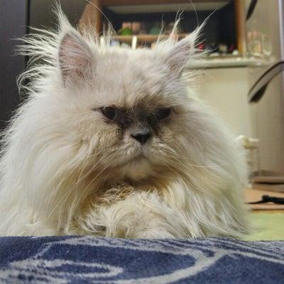 どんくさい自宅猫達の記事に添付されている画像