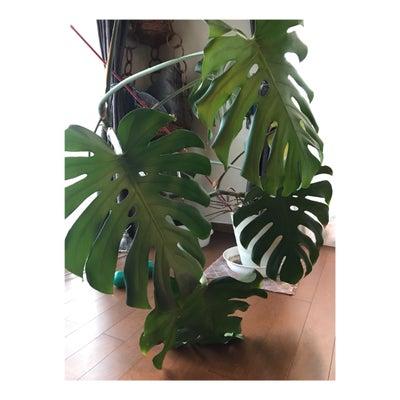 〝パワーストーン サプリメント シリーズ002〟~植物の変化もすごいです!!の記事に添付されている画像